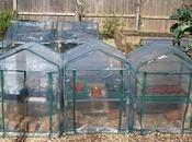 Getting Best from Your Mini-greenhouse