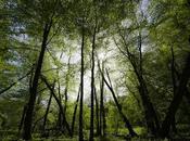Experiencing Nature Awaken from Hibernation First Sign Spring
