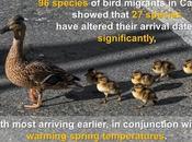 ClimateFacts Series: #ClimateChange #Science #Birds
