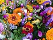 Most Popular Flowers Grown