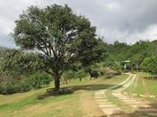 Unwinding Haranah Park