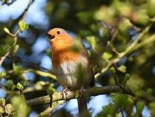Birds Sing Shorter Songs Response Traffic Noise