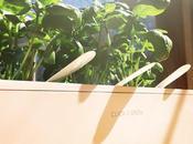 Taking Look Smart Garden Click Grow
