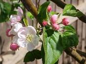 Late April Pics
