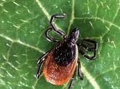 No-panic Guide Tackling Fleas Ticks Your