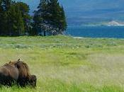 Video: Relaxing Hour Yellowstone