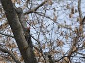 #Birding #Biodiversity #Backyard #Ontario #Birds #ClimateChange