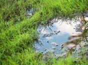 Find Proper Drainage System Your Household?