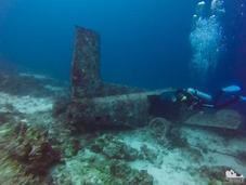 Scuba Diving Mactan: Exploring Coral Gardens Curious Artifact