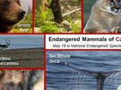 #NationalEndangeredSpeciesDay #May19 #Endangered #Animals #Canada