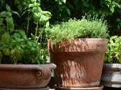 Summer Ready Garden