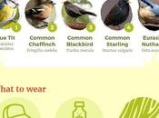 Beginners Guide Birdwatching