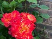 Irritating Plant Month Wrong Rose