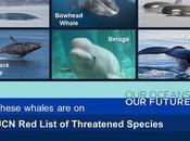 #WorldOceansDay #June8 #Ocean #Conservation #ClimateChange