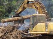 Dangers Global Road-building Tsunami
