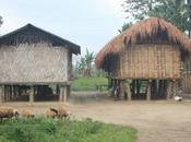 DAILY PHOTO: Rural Assamese Homestead