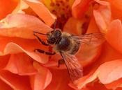 Pesticides Impair Honey Flying Abilities