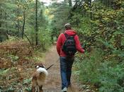 Keira's #ProvincialPark #dog Tours #HighFalls #AlgonquinPark #Ontario #Canada
