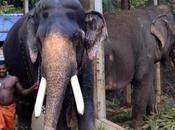 Cruel Treats Animals Badly Right Advise