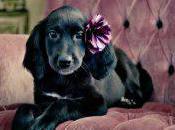 PETA Kills While Others Rehabilitate 'Unadoptable' Pets