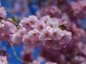 Exploring History Cherry Blossom Season