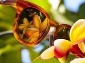 Discover Most Original Maui Sunglasses