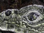 Friday Fotos: Five Views Painted Reptile Rocks