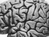 Neuroscience Facts Yogis Yoginis