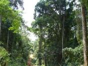 Private Patrols Support Bugoma Forest Conservation