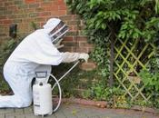 Never Wasp Nest Removal Your
