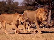Xanda, Cecil Becomes Victim Game Hunting
