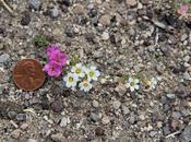 Waylaid Wildflowers