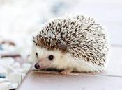 Twelve Months Endangered Animals Hedgehogs