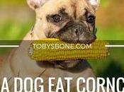 Corncob?