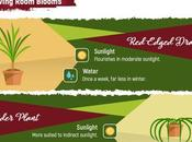 Infographic Ultimate Houseplant Cheat Sheet