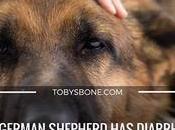 Help! German Shepherd Diarrhea! What Should