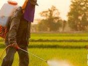 Poison Papers Documenting History Pesticide Hazards United States