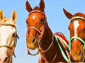 Discover Santorini Horse-riding Tours