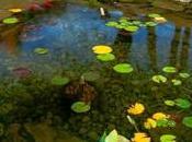 Wrinkles Pond Liner