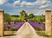 Wonders Provence