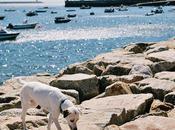 Summer Scenes Porto