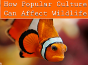 Popular Culture Affect Wildlife