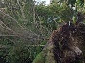 Snapshots from Hurricane Irma Southeast Florida