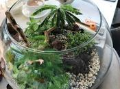 Terrariums Terrifically Popular Again