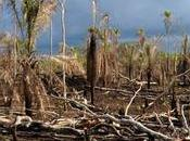 Degraded Tropical Forests Release More Carbon Than They Store