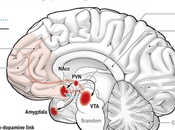 Brain Circuits That Modulate Sociability.