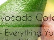 Avocado Collection Everything With Avocados