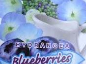 Old-fashioned Hydrangeas