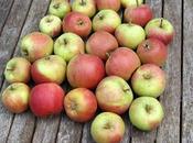Greasing Apple Trees!