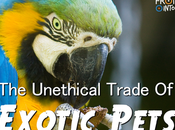 Unethical Trade Exotic Pets